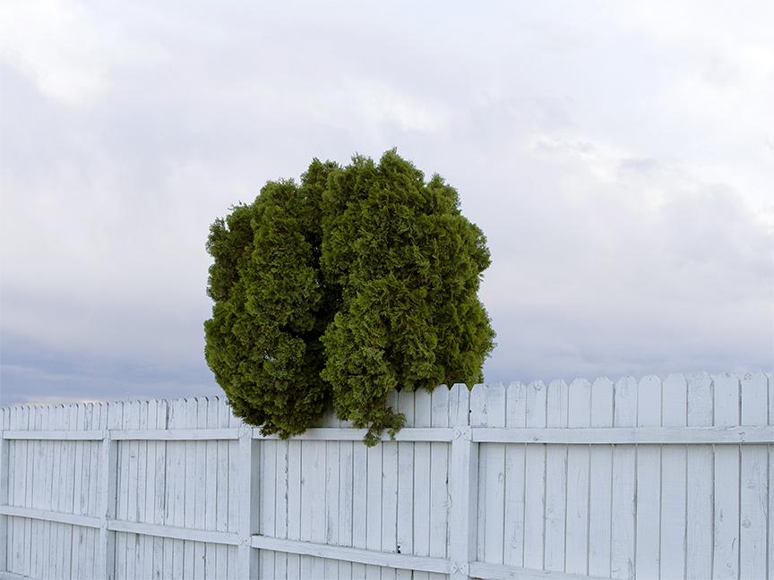 http://www.erikamiyagiwa.com/files/gimgs/20_ontario-tree.jpg